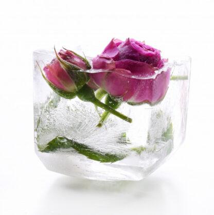 Гідролат дамаської троянди Rose Damascena